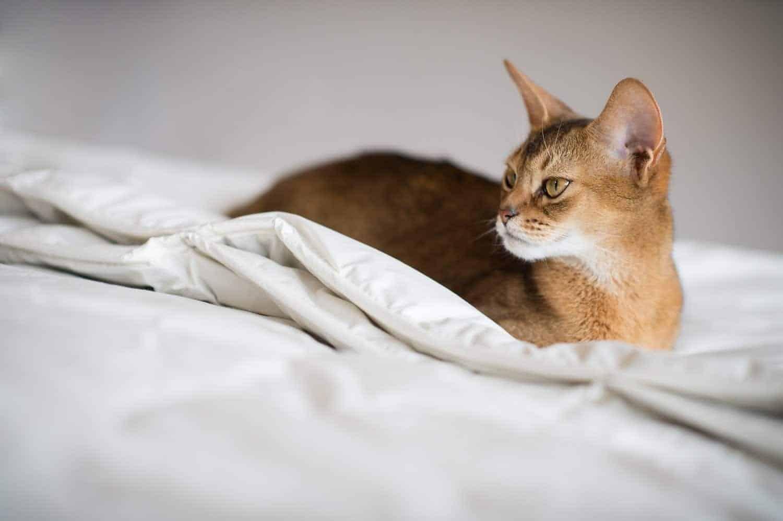 Gesunder Schlaf weckt neue Kräfte